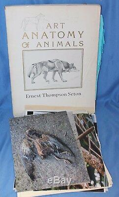 Bates Motel Norman's Animal Anatomy Taxidermy Art Book Set Movie TV Prop